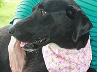 Daphne's story To be considered for adopting a dog from