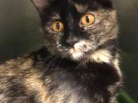 Darby is a gorgeous female tortoiseshell kitty. She was
