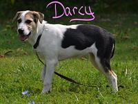Darcy's story Darcy is a loving puppy in search of a
