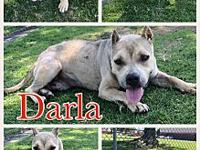 Darla's story Darla is a mellow and happy girl that