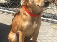 Darla is a 1 year old, 16 lb, golden spaniel mix. She's