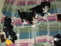 Born 5/7/12, available 7/7/12 at eight weeks old on