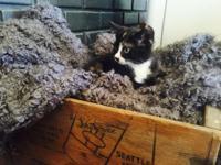 Hi:). I have a ADORABLE 8 week old calico kitten