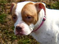 My story Darling Donna is a sweet and shy companion.