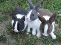 Howdy! I have some adorable little dutch bunnies now
