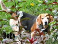 Dolly is an enjoyable, affectionate and sweet adult