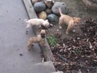 We have 3 darling, charming and spirited young puppies