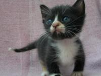 Ad updated 7-20-15 This kitten is very sociable /