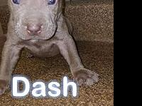 dash's story These Little Babies Are Ready For Their