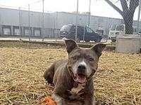Dash's story Dash is a 6 year old neutered male who