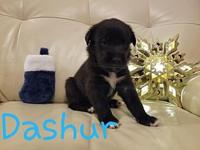 Dashur's story     Thank you for checking out
