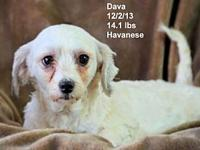 Dava's story Please contact Constance