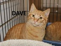 Dave's story Meet Dave! He is a very sweet cat needing