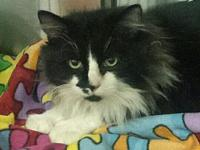 DaVinci's story DAVINCI MALE 4YRS OLD Sweet boy, likes