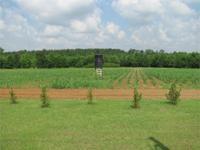 Around 270 Acres Washington County Georgia near