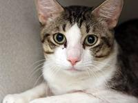 Dawg's story Primary Color: Grey Tabby Secondary Color: