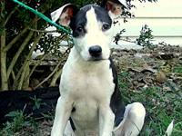DAWSON's story ADOPTION INFORMATION IS LOCATED ON OUR