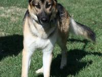Dax is a very handsome and big boy.  He came to us from
