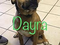 Dayra's story Dayra is an energetic puppy, who loves