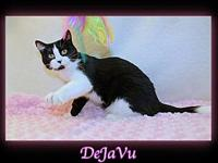 De Ja Vu's story You can fill out an adoption