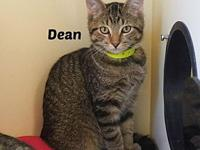 Dean's story Dean and his sibling Sam are a bonded