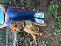 Dean's story Dean is a male whippet/Shar Pei mix baby