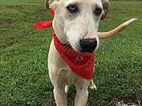 Debbie's story I am sweet girl ! Found on the side of