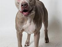 Debo's story Debo is an active pooch! He loves being on