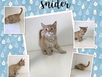 DEE SNIDER's story DEE IS HERE WITH HIS 4 LITTERMATES.