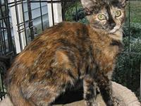 My story DeeDee is a young TORBIE abandoned with three