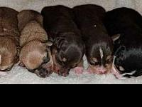 Deedee's Male Puppies's story owner surrender, they