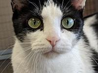Deena's story Meet Deena! This sweetheart is a reformed