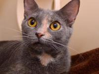 Deena's story Hello, my name is Deena! I am a sweet