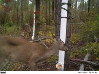 I have two gravity fed deer feeders for sale. Both were