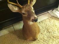 I have a deer head that was giving to me by a friend
