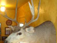 Mule Deer Head Mount ~ $200.00 3 x 5 Contact James @