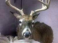 Second Chances has a listing for a number of deer