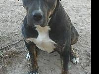 My story Handsome Deke is a 2-year-old pit mix that is