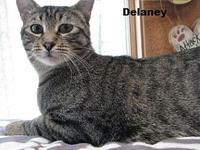 Delaney's story ~~Delaney was found in a barn in St.