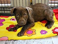 Delilah's story Meet Delilah a sweet Hound mix about