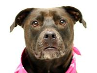 Delilah is a fun 3 year old female.  She came to the