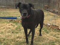 Delilah is a blind, 9-year-old Labrador/Boxer mix who