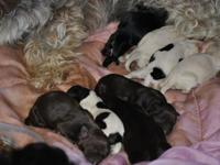 I have a new litter of puppies.There is a lot of