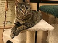 Della's story Della is a stunning brown tabby who is