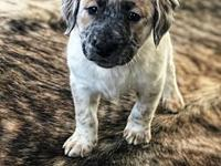 Demeter's story Demeter is an 8 week old mixed breed