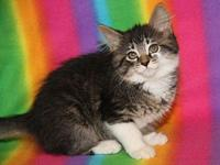 DEMI--adoption pending's story **THIS KITTEN WILL BE