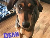 Demi's story Demi is a 1 year old, female, Doberman
