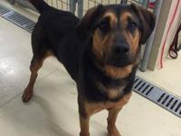 Demi is a beautiful 2 1/2 year old German shepherd mix