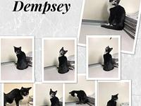 Dempsey's story Hello, Im Dempsey and I am a 4 month