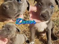 Denver's story Denver is a 10 week old male. He is